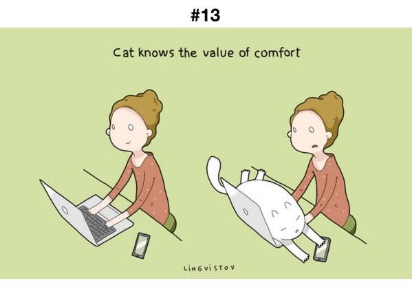Manfaat Kucing 13