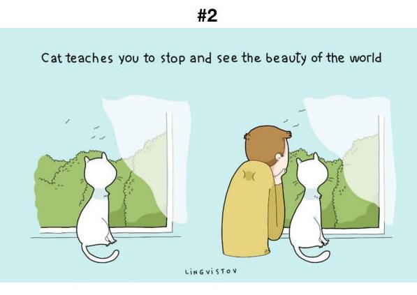 Manfaat kucing 2