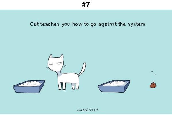 Manfaat Kucing 7