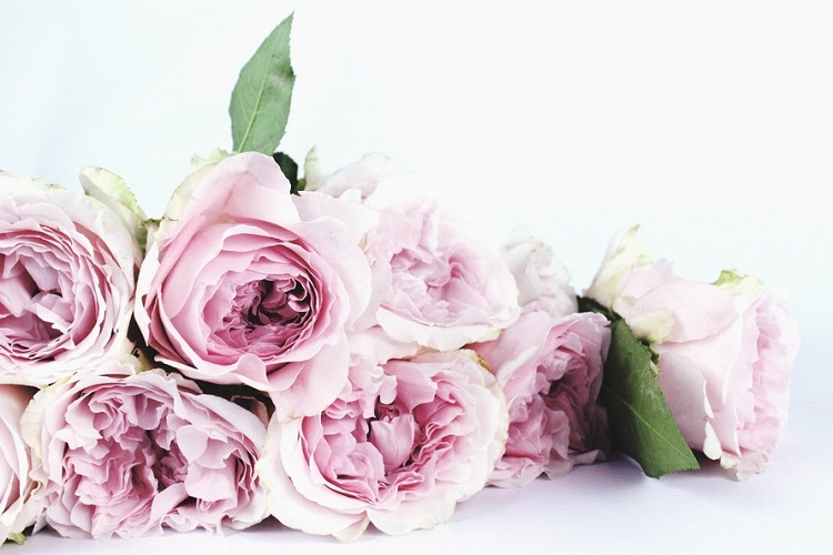 gambar-dp-bunga-mawar