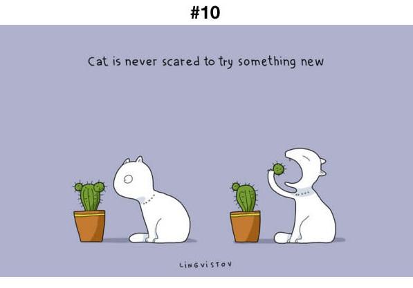 Manfaat Kucing 10
