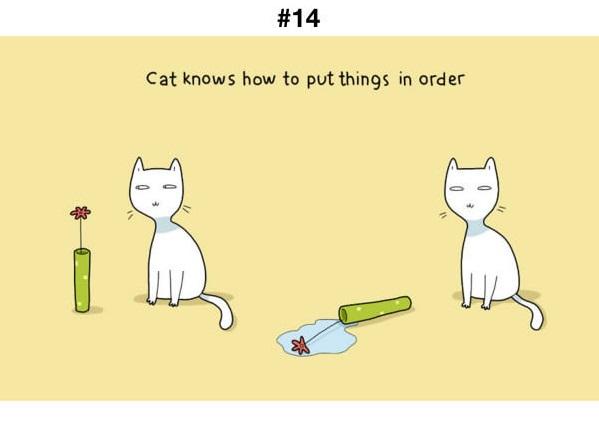 Manfaat Kucing 14