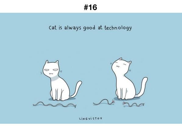 Manfaat Kucing 16
