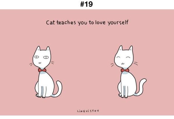 Manfaat Kucing 19