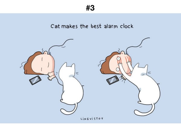 Manfaat Kucing 3