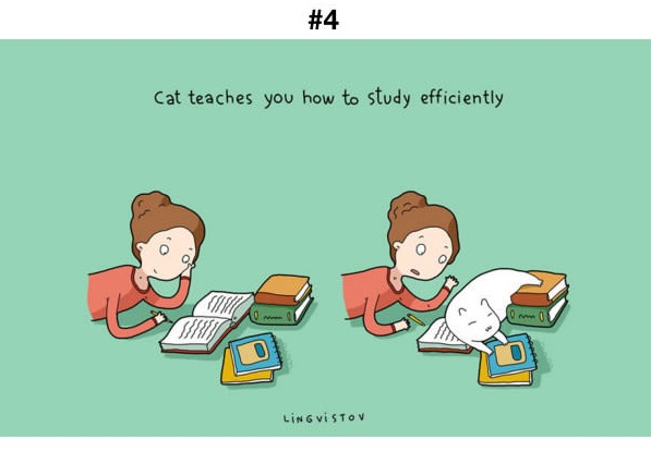 Manfaat Kucing 4