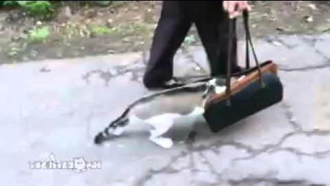 Harga Kandang Kucing kucing