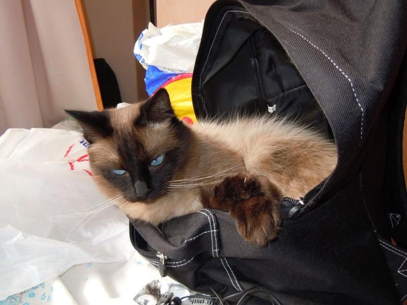 Harga Kandang Kucing Tas Portable