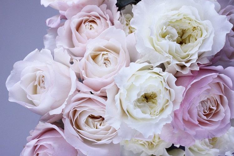 bunga-mawar