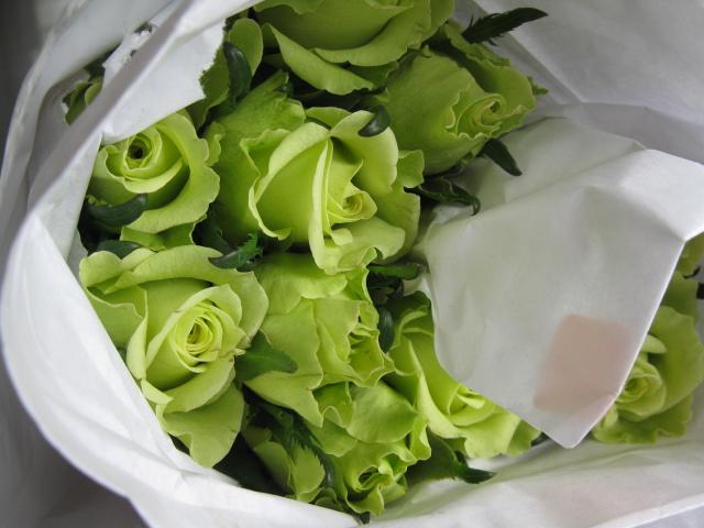 gambar mawar hijau
