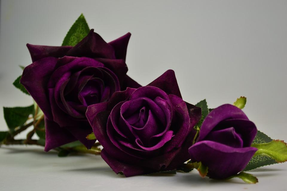 20 Gambar Bunga Mawar Indah Ini Pasti Akan Menghipnotismu Spirit Of Dhuha