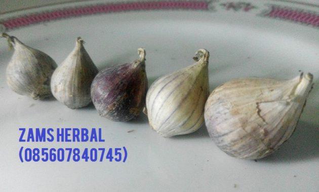 Jual Bawang Lanang